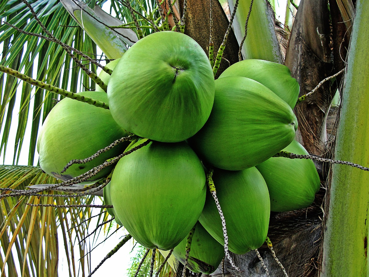 Dvě polévkové lžíce kokosového oleje denně a jaké divy udělají s vaší váhou